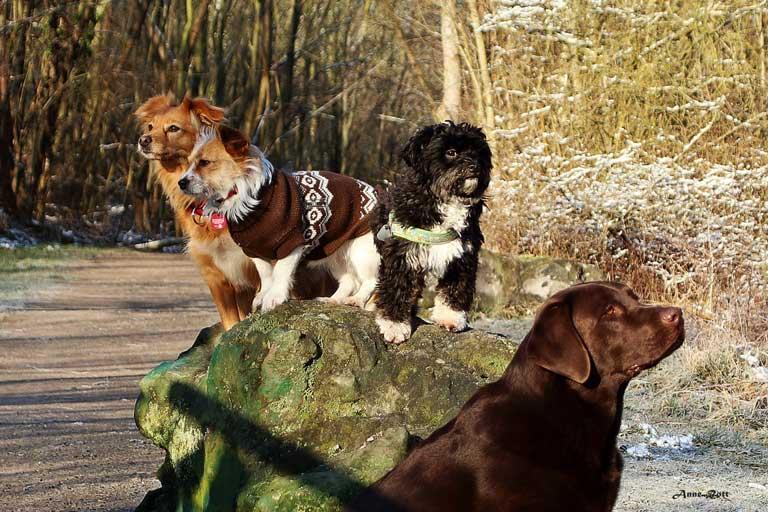 Hunderunde Hundeschule Markkleeberg